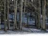 Foto und Copyright: Moser Albert, Fotograf, 5201 Seekirchen, Weinbergstiege 1, Tel.: 0043-676-7550526 mailto:albert.moser@sbg.at  www.moser.zenfolio.com